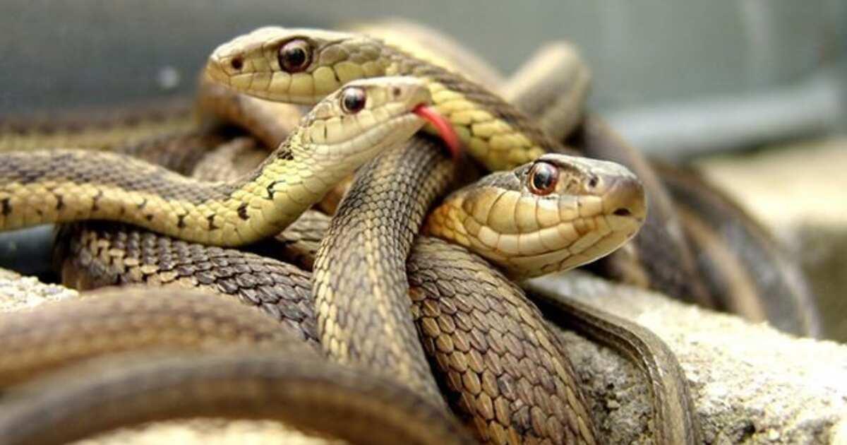 фото подружек змей лысой