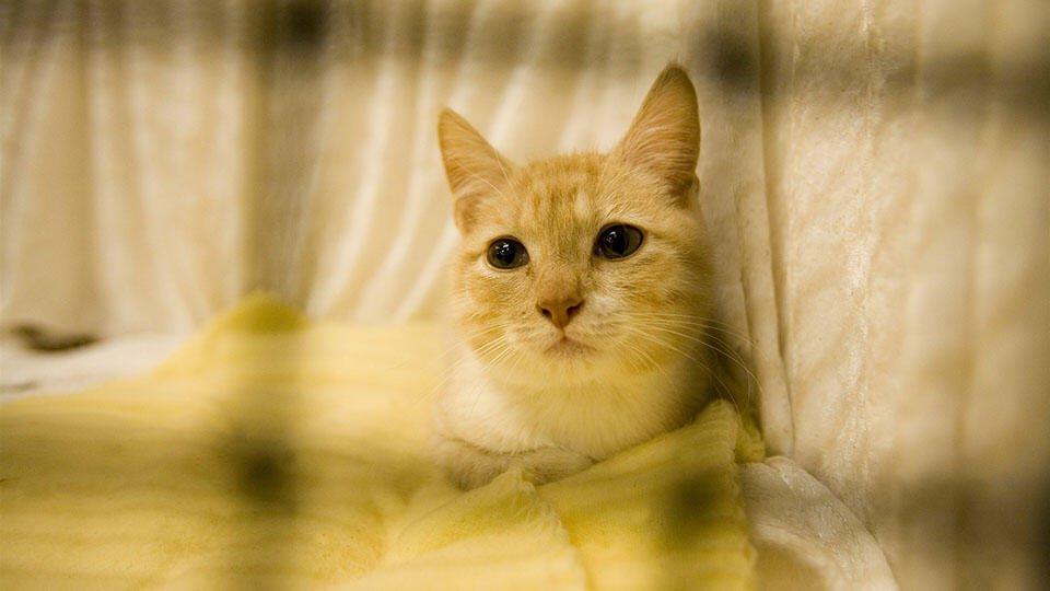 Катастрофа: 110 кошек делили с хозяином квартиру в Испании