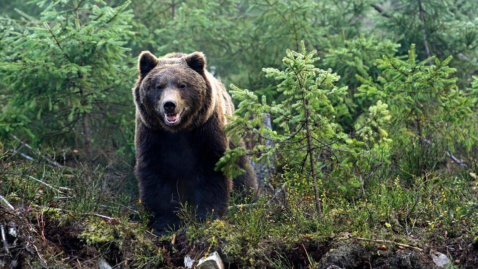 Медведь напал на морских охотников на Чукотке, есть пострадавший