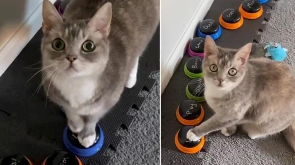 Хозяйка научила кошку сообщать ей о своих эмоциях