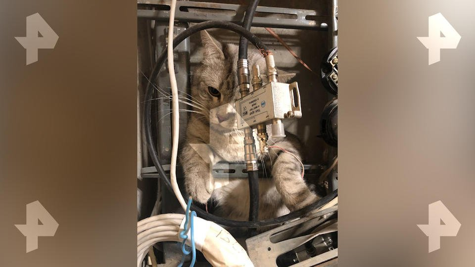 Забравшегося в электрощиток кота спасли на юге Москвы