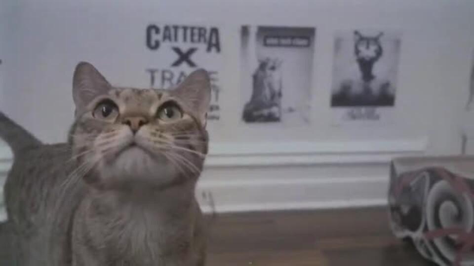 Коты играют метал: музыкальная группа хвостатых появилась в США