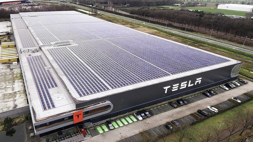 На Tesla Илона Маска подали в суд из-за змей и ящериц