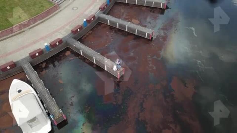 Видео: загрязненную нефтепродуктами реку в Химках сняли с коптера