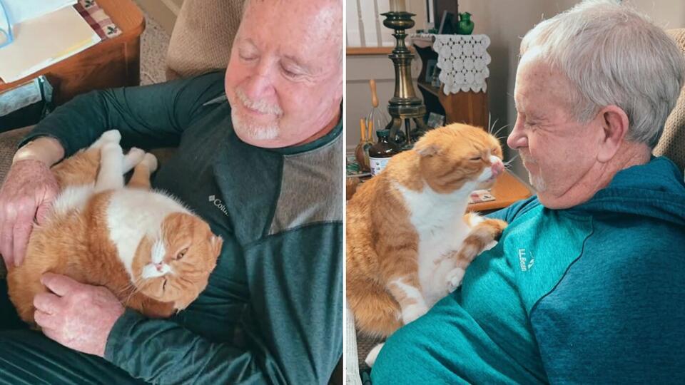 Не отходит: кошка стала другом онкобольного дедушки и растрогала Сеть