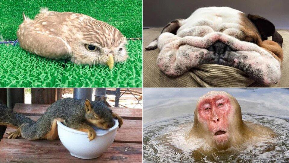 Забавные фото животных, которых жара застала врасплох
