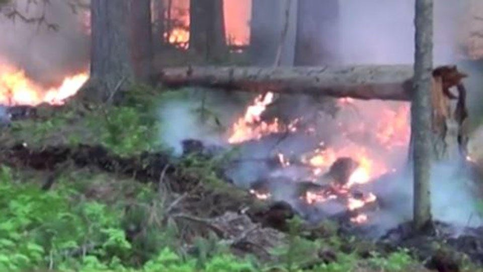 В Иркутской области ввели режим ЧС в лесах из-за пожаров