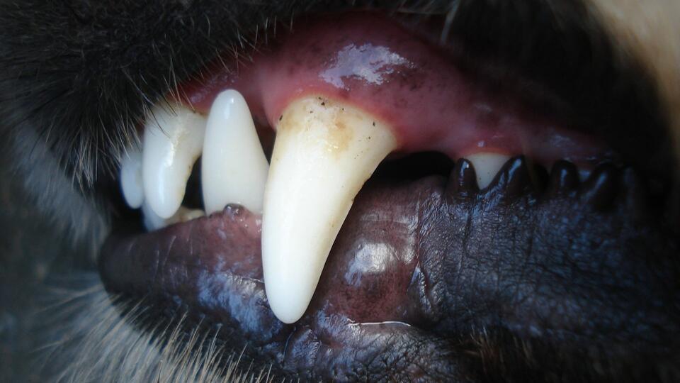 После гибели растерзанного собаками мальчика в Башкирии завели дело