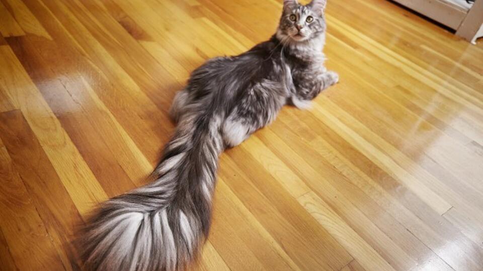 пушистый хвост кота картинка другой стороны, самые