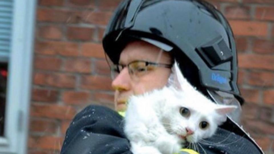 Пожарные спасли котенка при пожаре на загоревшейся АЗС в Чечне