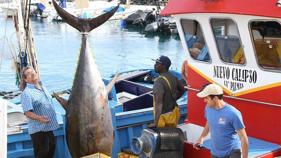 Ловись, рыбка: поразительные уловы везучих рыбаков