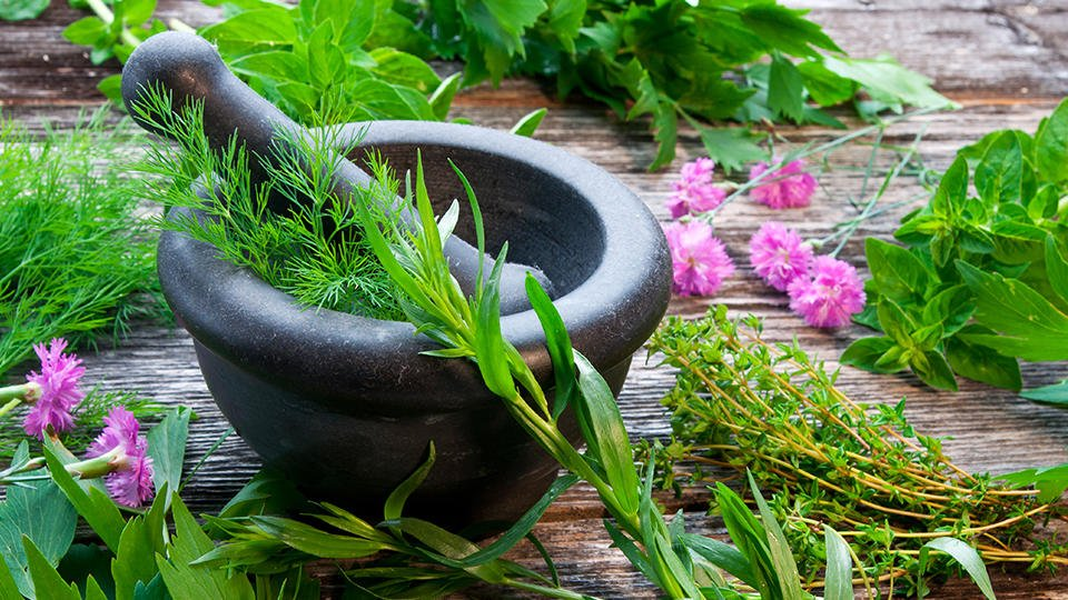 Зеленый суперфуд: живительные травы, о которых мы забыли