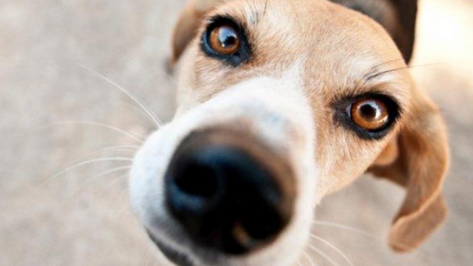 В Австрии служебных собак обучат находить людей с COVID-19 по запаху