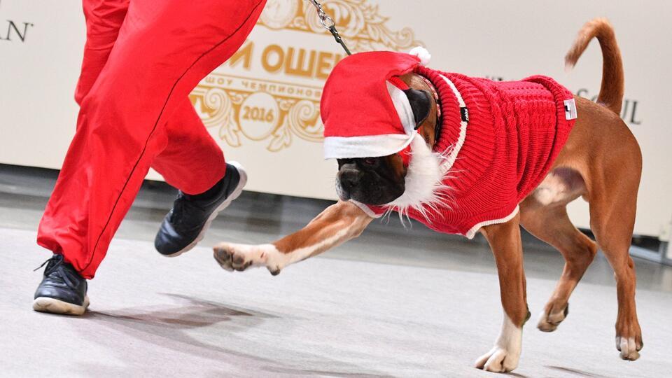 В Японии прошел благотворительный забег Санта-Клауса