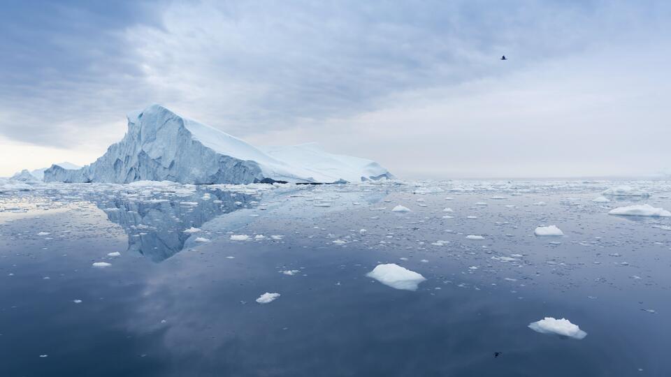 Под шельфовым ледником Антарктиды нашли странных существ