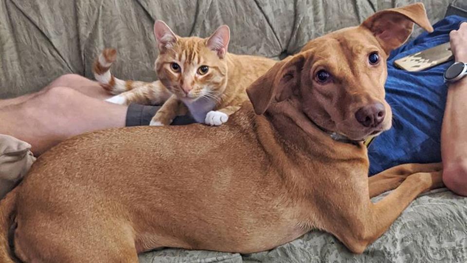 Одни дома: видео с утешающими друг друга котом и псом растрогало Сеть