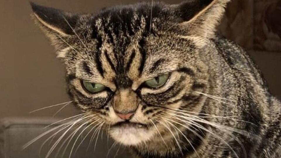 В Сети нашли «преемницу» самой сердитой в мире кошки