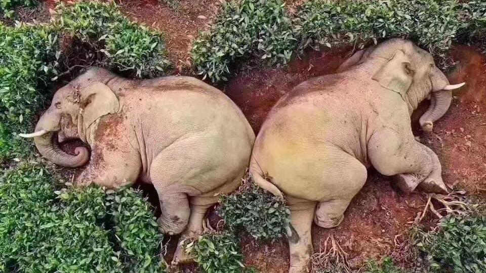 Более 20 слонов внезапно скончались в парке в Зимбабве
