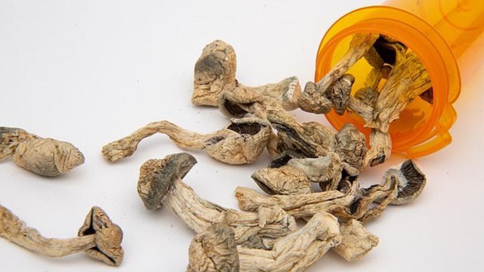 Чешские ученые предложили лечить депрессию грибами