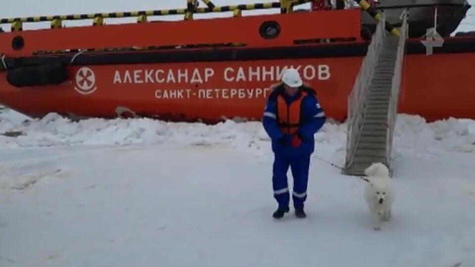 Российский ледокол спас собаку посреди Карского моря