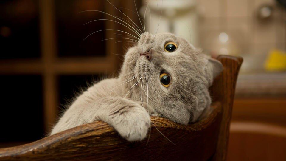 Может ли домашняя кошка заразить вас коронавирусом: мнение экспертов