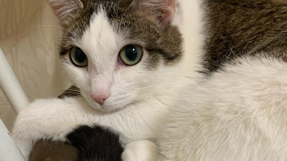 На Урале мужчина объявил войну девочке из-за кастрации его кота