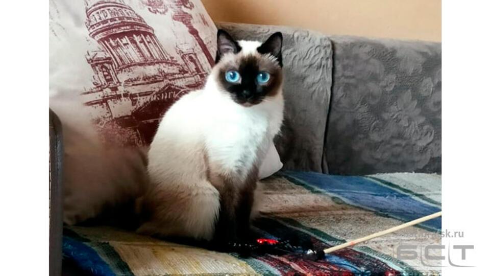 """Фото: """"самая маленькая в мире"""" кошка Ляля из Братска очаровала Сеть"""