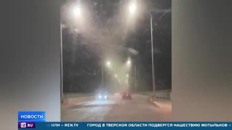 В Тверской области происходит нашествие мотыльков
