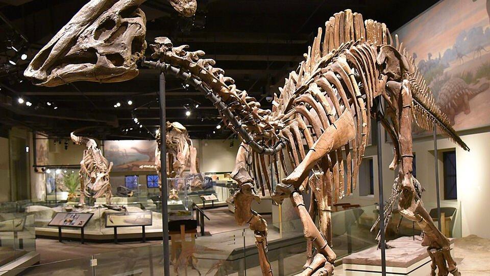 Ученые выдвинули новую версию причины вымирания динозавров