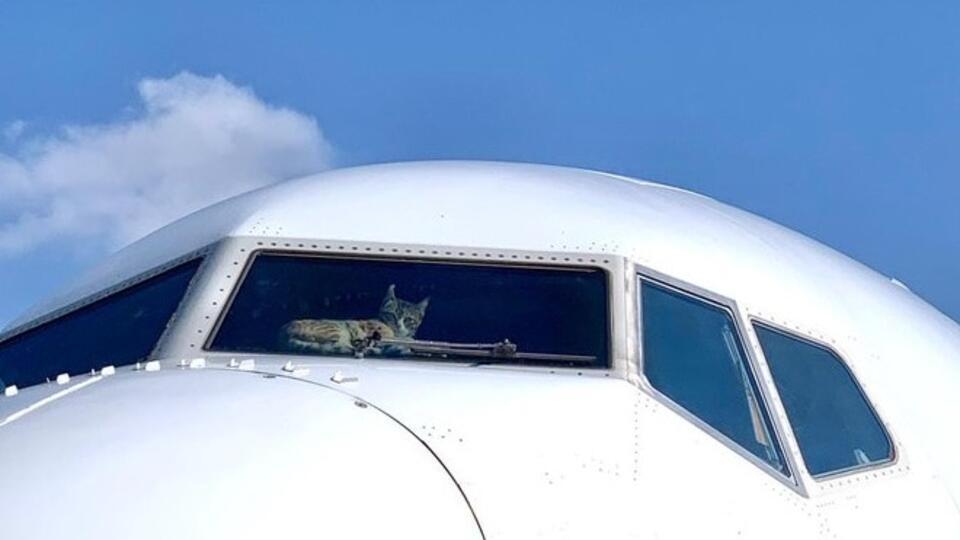 Кота случайно заперли в самолете на 2 недели в Тель-Авиве 1 | ВЕТКУПОН - всё о животных: новости, ветуслуги, зоотовары в Москве