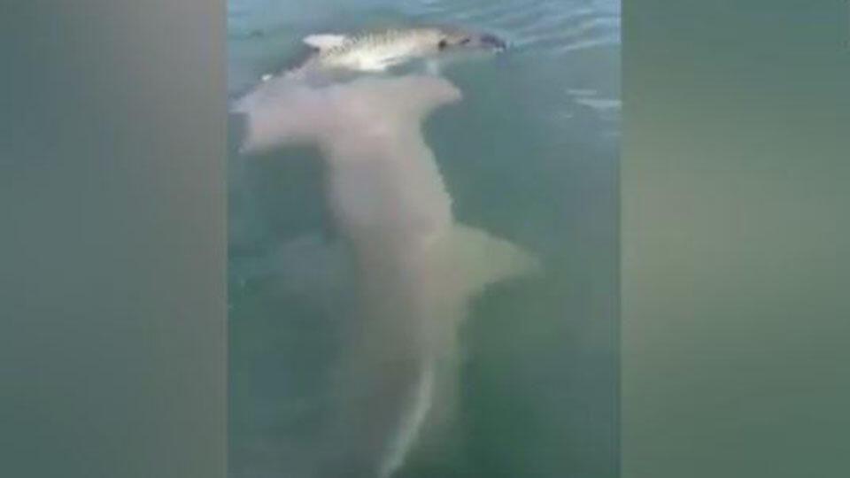 Видео: огромная акула выхватила улов из рук рыбака