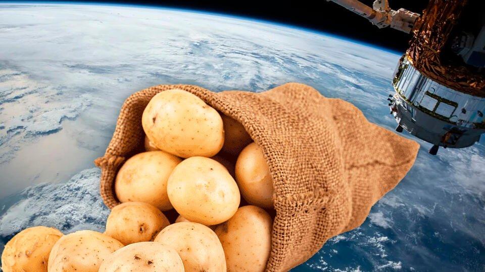 В Китае предложили выращивать в космосе ГМО-картофель с вкусной ботвой