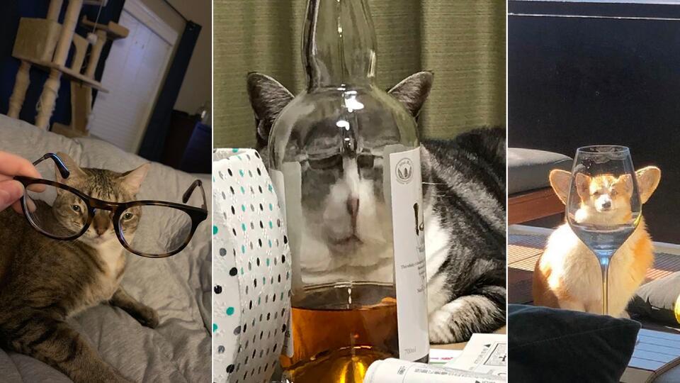 В Сети делятся смешными фото животных, сделанными через очки и бокалы