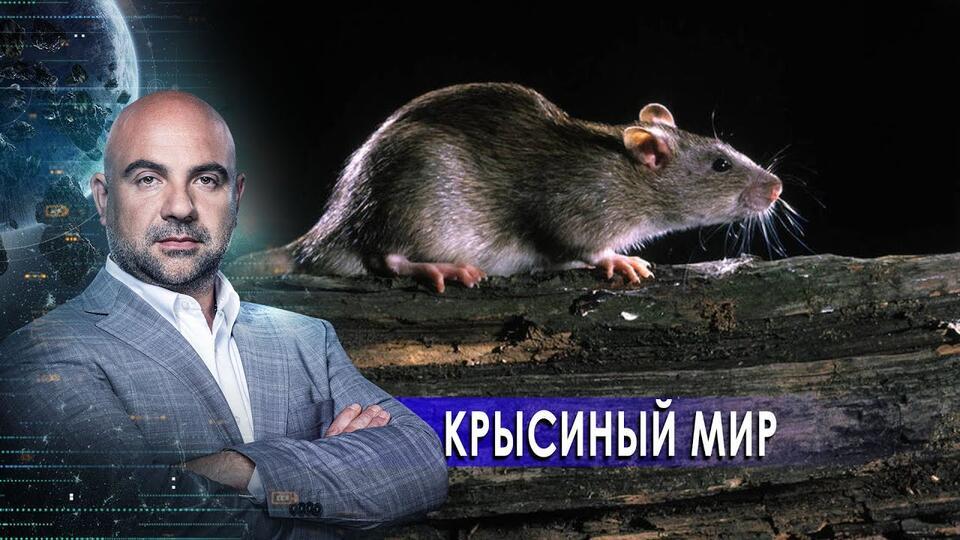 Крысиный мир. Как устроен мир с Тимофеем Баженовым (20.02.21).
