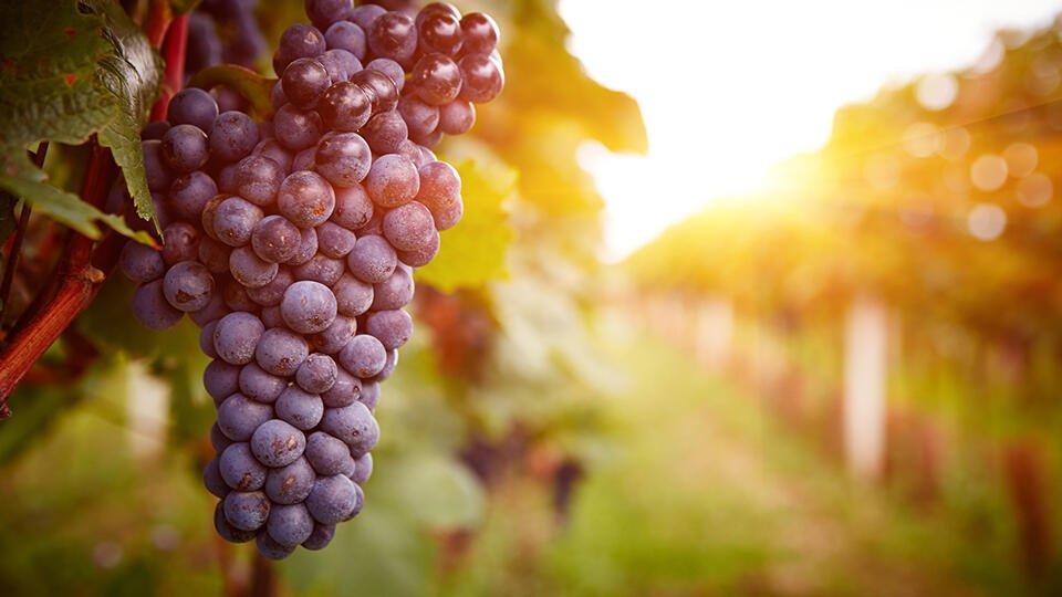 На винограднике в Крыму нашли 6 боеприпасов времен войны