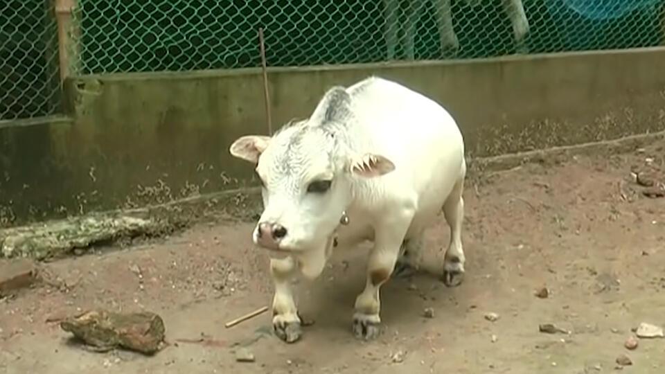 Ученые захотели спасти планету от особо опасной коровьей мочи