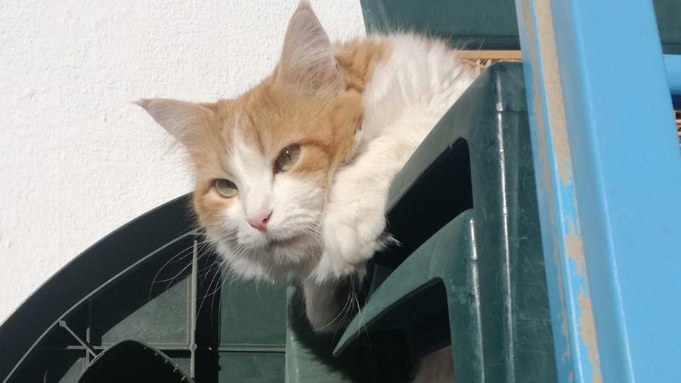 СМИ: В Испании выявили первого зараженного коронавирусом кота