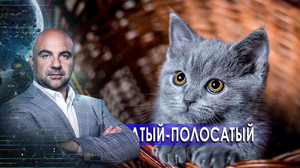 Усатый-полосатый. Как устроен мир с Тимофеем Баженовым (19.02.21).