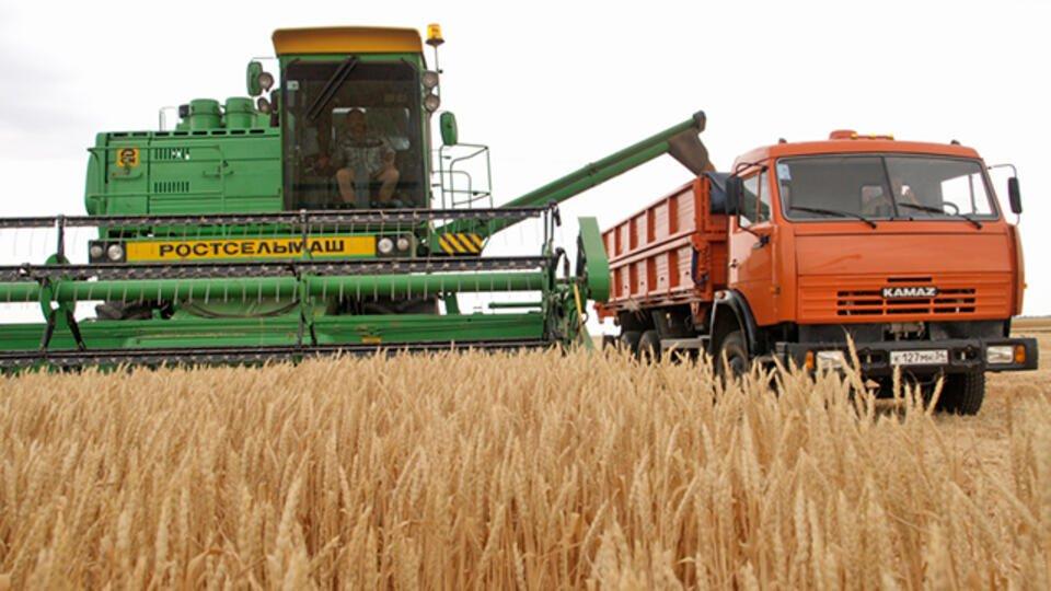 В России ожидают собрать в 2020 году рекордный урожай зерна