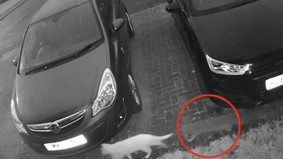 """Навещает после смерти: женщина уверена, что засняла кота-""""призрака"""""""