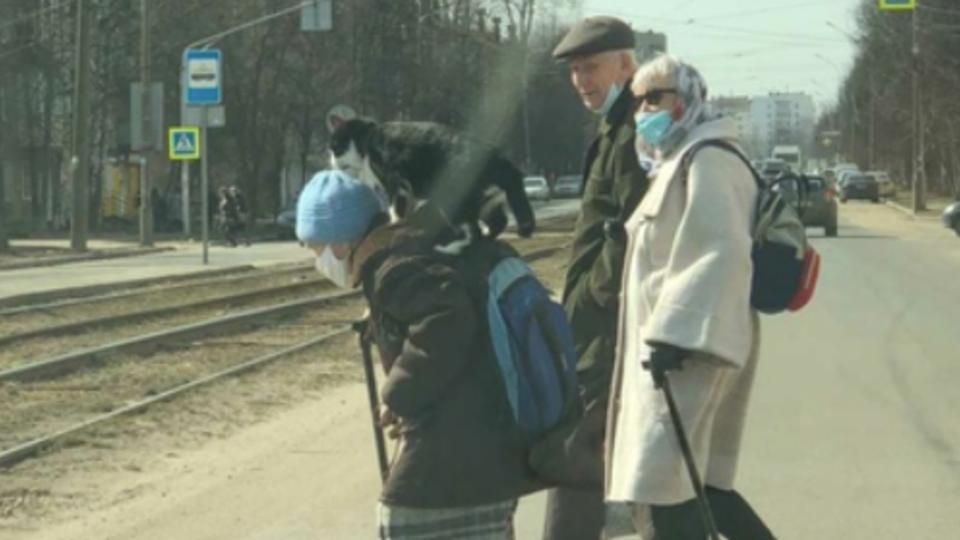Не расстаются: бабушка и кот из Ярославля прославились в Сети