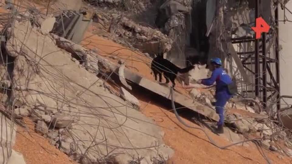 В Бейруте кинологи МЧС нашли места под завалами, где могут быть люди