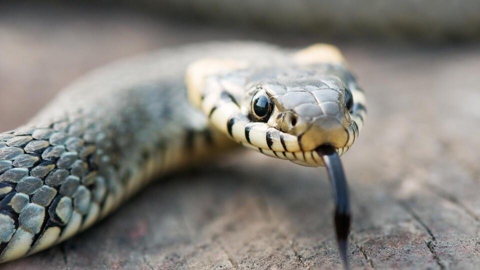 Видео: ползущая по набережной змея шокировала жителей Тюмени
