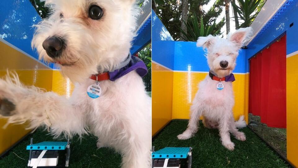 Блогер построила фотобудку для селфи собак