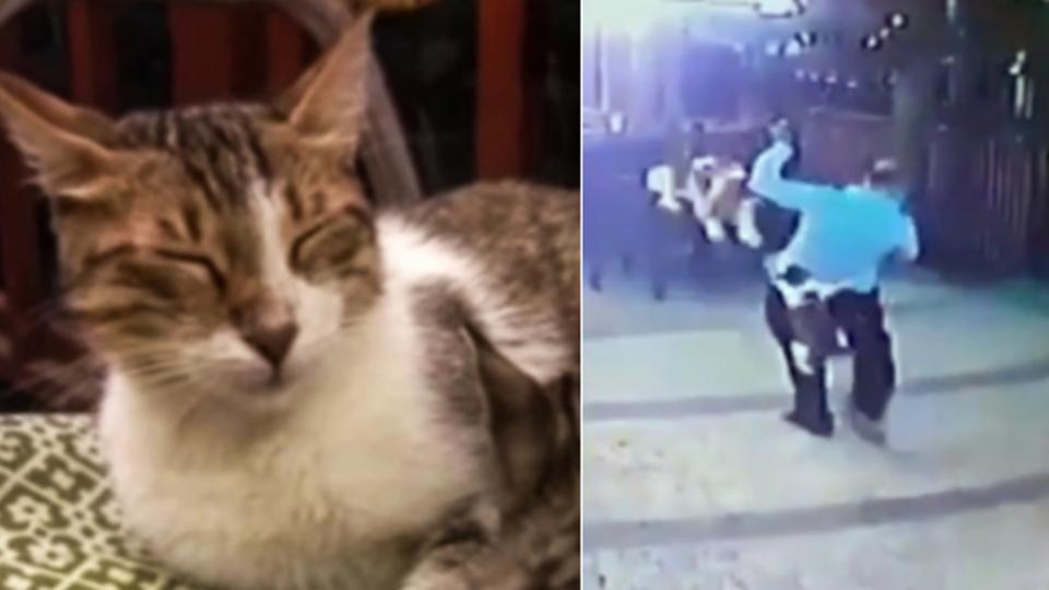 Камера сняла, как кошка стянула штаны с мужчины на улице