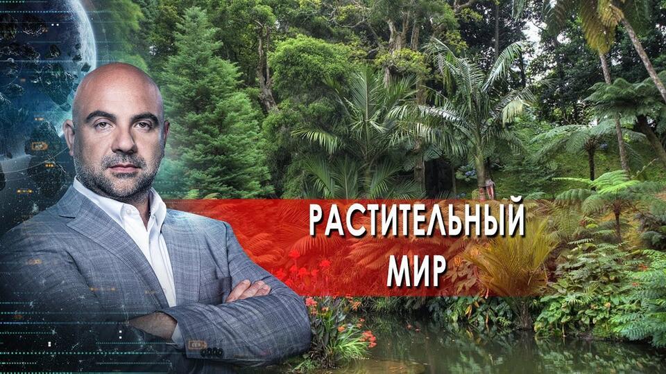 Растительный мир. Как устроен мир с Тимофеем Баженовым. (07.06.2021)