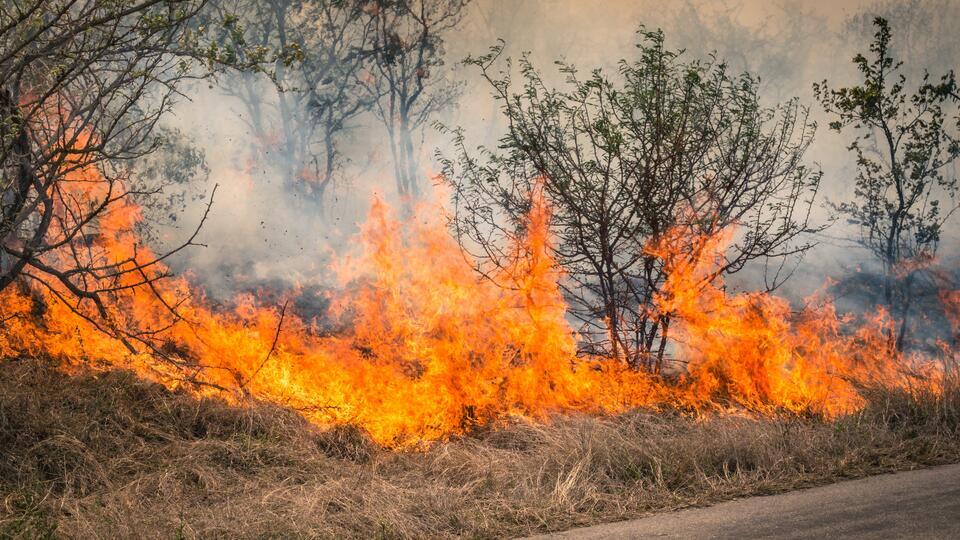 Лес на площади 72 гектара горит в ХМАО