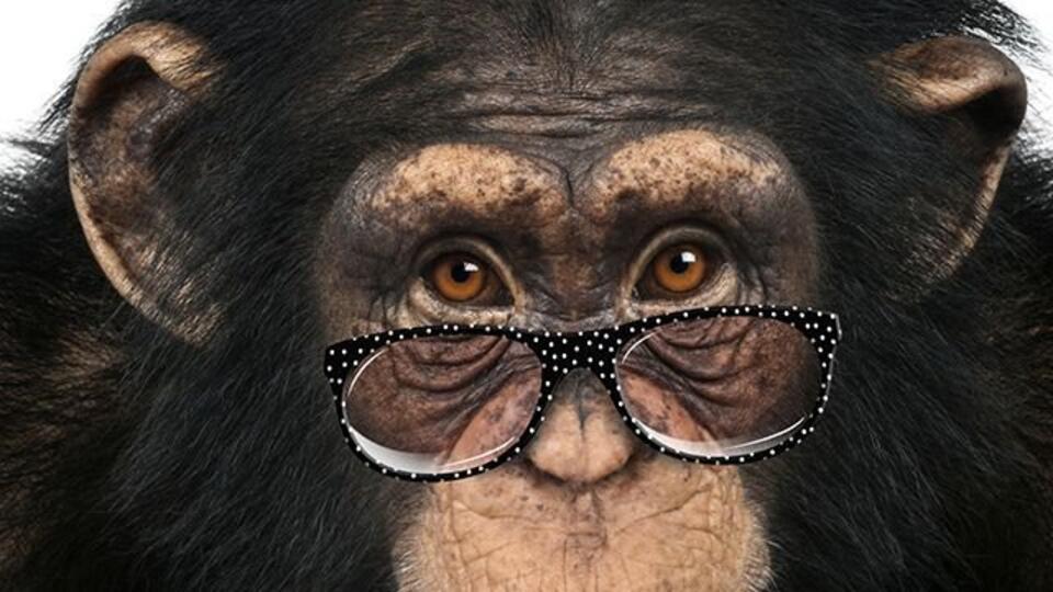 Ученый из России выдвинул альтернативу теории эволюции Дарвина